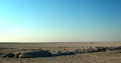 Pan shot from the bare,desolate Makgadikgadi saltpans of Lehkubu Island to the  Baobabs,Adansonia sp  trees growing out of the rocks to