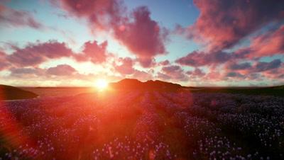 Lavender field against beautiful timelapse sunset