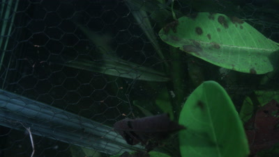 Amazon River Underwater,Wire Structure Possibly Fish Trap