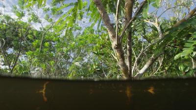 Amazon River,Split Shot Just Below Surface