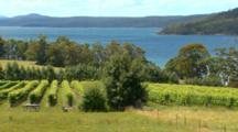 Seaside Vineyard, Winery
