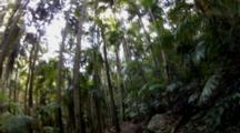 Walking Through Purling Brook Falls Forest, Queensland