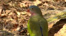 Princess Parrot Rests