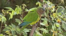 South American Birds Edited Video