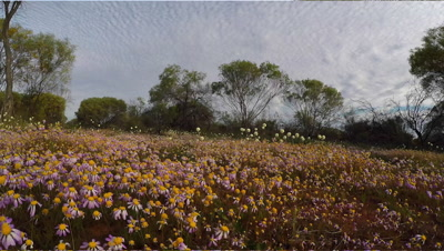 Flowers,Wild, travel, Australia