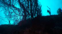 Cliff View, Diver, Background