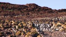 Magellanic Penguins Walkway Timelapse