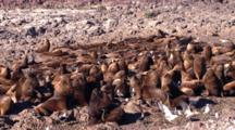 Sea Lion Bulls Colony, Time Lapse