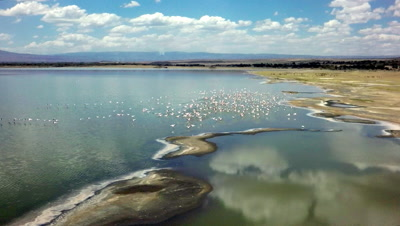 Flock of flamingos fly over Lake Elementaita and land,slow motion 100 fps aerial