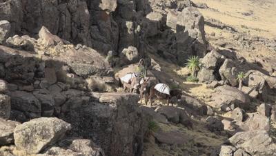 Simien mountains shepherds with donkeys