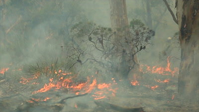 Bushfire burning fire fighting