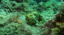 Longlure Frog Fish Catches Prey