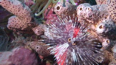 feather duster and sea anemone on colorful sponge