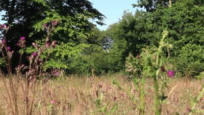 a meadow in the forest