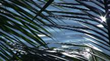 Lagoon And Reflection Through Palm Branch