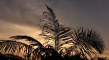 Palm Tree Silhouette At Sunrise