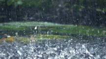 Close-Up Intense Rain Hitting Ground
