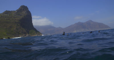 Cape Fur Seals and South African coast