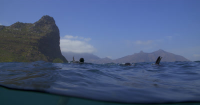 Cape Fur Seal and South African coast