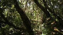 Timelapse, Forest Chiloe Island