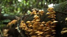 Fungi Growing On Decaying Log