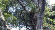 Epiphyte On Tree Trunk