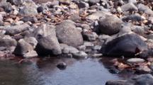 Komodo Dragon On Rocky Shore