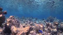 Coral Framing Blue Water And Reef Fish, Vaavu Atoll, The Maldives