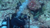 Scuba Diver Laying On Side To Photographs Pair Of Black Spotted Moray Eel, Vaavu Atoll, The Maldives