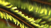 Close Up Of Feather Star Arms, Ecu, The Visayas, The Philippines