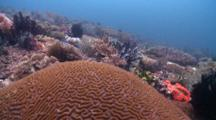 Track Over Brain Coral In Reef, Malapascua, Philippines