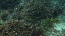 Groupers Brown-Marbled Komodo