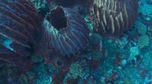 Barrel Sponges Looking Down