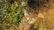 Komodo Dragon Sleepy