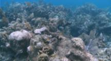 Coral Reef And Needlefish Off Roatan Honduras