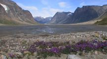 Flowers & Fiords In Auyuittuq National Park, Baffin Island