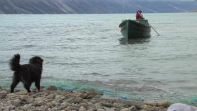 Inuit Man Setting Fishing Net From Freighter Canoe With Dog, Coronation Fiord, Auyuittuq National Park, Baffin Island