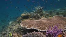Recovered Reef Bunaken Marine Park