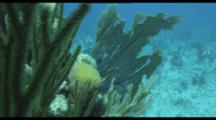 Travel over coral reef,focus on soft corals