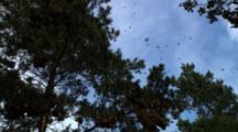 Monarch Butterflies Flying Over Head