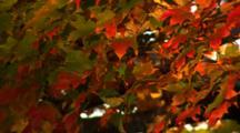 Autumn Tree At Dusk