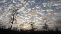 Dawn In Early Spring In Cypress Swamp (Cypress Trees In Silhouette) In Big Cypress National Preserve, Florida