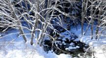A Stream Running Through A Snow Covered Forest, Central Cascades, Washington