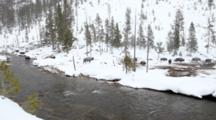 Bison Herd On The Move In Thermal Area In Winter In Yellowstone National Park, Wyoming, USA