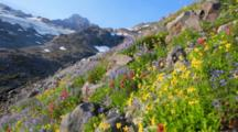 Mt. Rainier National Park, Wildflowers In The Upper Paradise Valley In Mid-Summer, Washington, United States