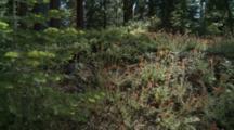 Alpine Forest Wildflowers