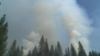 Smoke billows out of trees from a forest fire