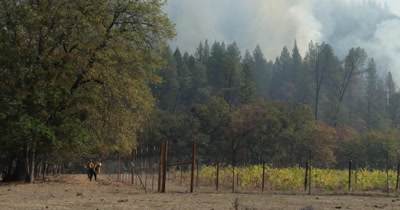 Firefighters protect a vineyard while wildland fire burns nearby