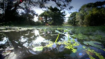 Pond in City Park,Golden Gate Park,San Francisco,CA