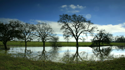 Oak Trees reflected in Pond,Sonoma,CA